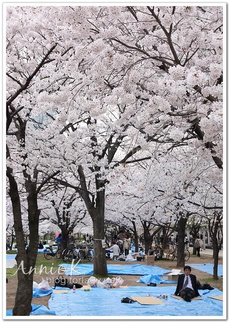 大阪城公園_大叔在佔位置