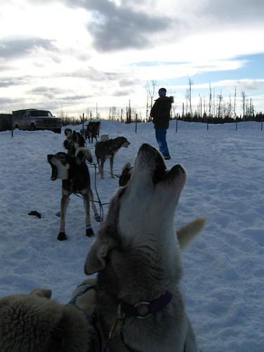 Training-Jr-Iditarod-Aurora-2-2012-6