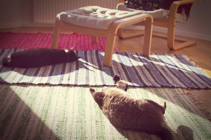 Polly and Olivier enjoying the sun.