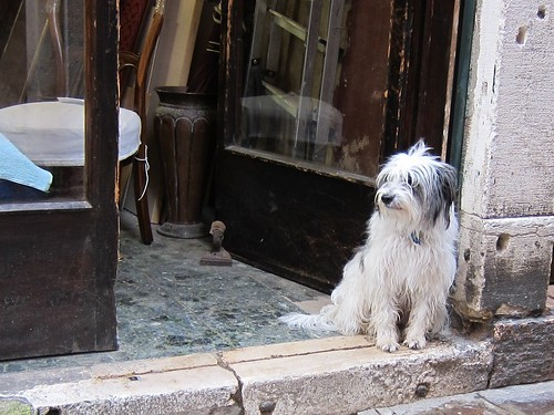 shop dog in Venice