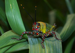 Congo River Critters - 11March2012