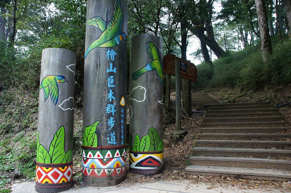 觀霧巨木步道-080