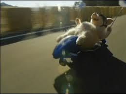 whee pig 2