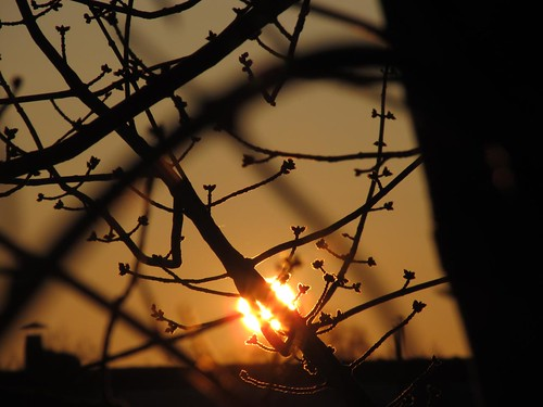 trees red sun tree nature crimson silhouette sunrise dawn golden spring glow bright branches twig april gleam bud radiant beaming