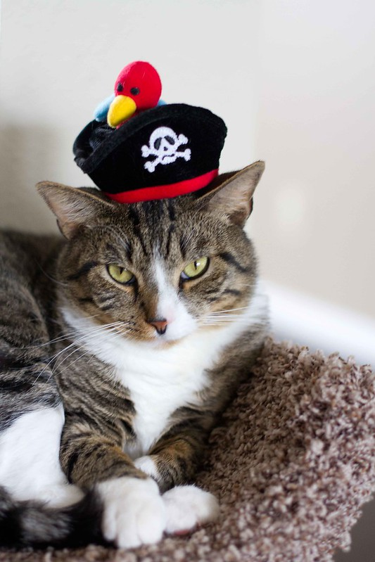 percy the pirate