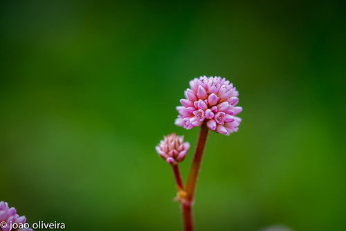 small fragile flower
