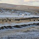 Transsibérien - Mongolie - Jour 1