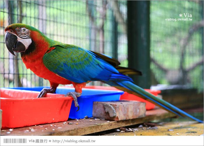 【新竹景點推薦】森林鳥花園~親子旅遊的好去處!在森林裡鳥兒與孩子們的樂園39