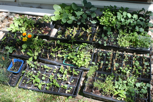 sunning seedlings IMG_5614