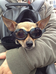 image of a dog wearing sunglasses