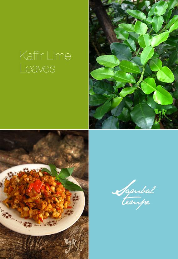 Sambel Tempe & Kaffir Lime Leaves