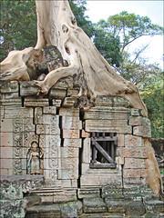 Fromager dans Preah Khan (Angkor)