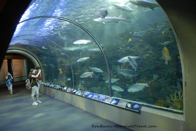 Audubon Aquarium Of The Americas New Orleans Lousiana