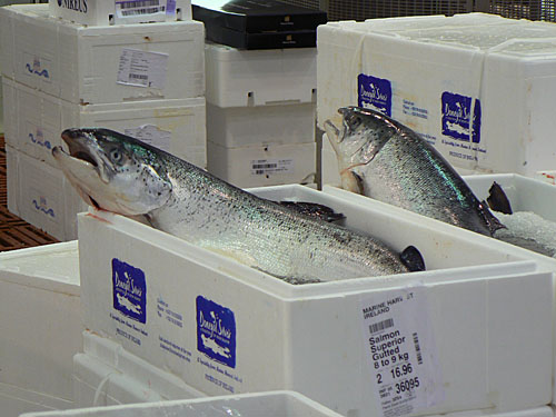 gros saumons.jpg