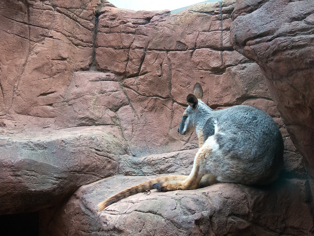 Sydney Wildlife World in Sydney, Australia