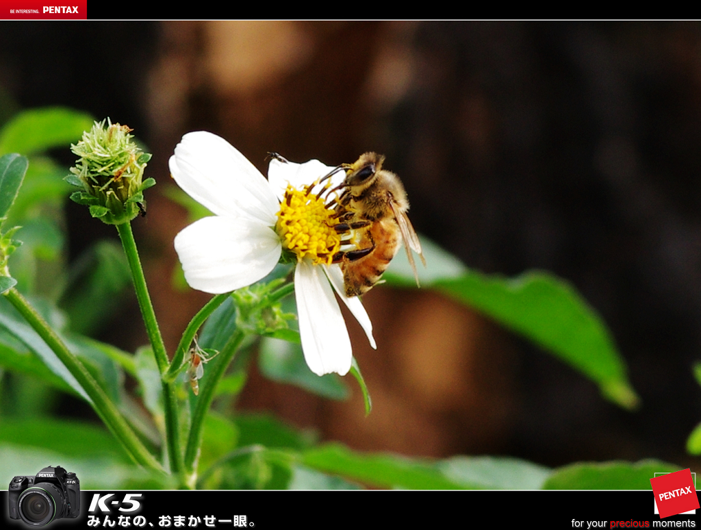 哥兩好-蜜蜂與蝴蝶~