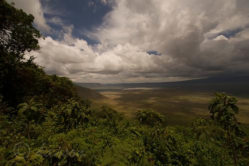 tanzania nationalpark serval ngorogorocrater