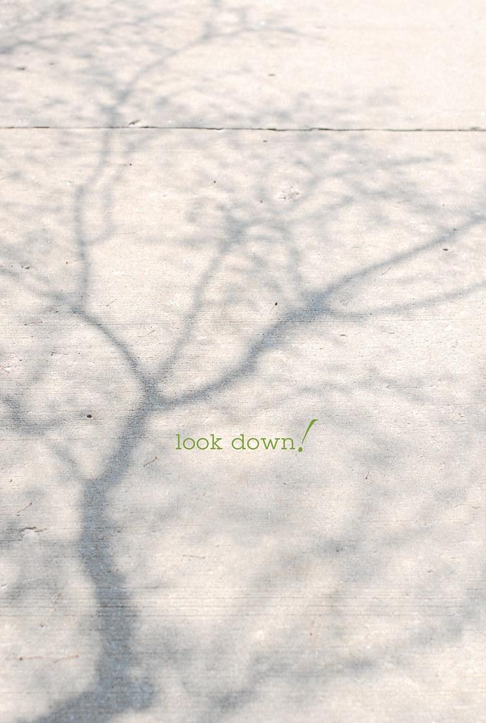 blossom shadow