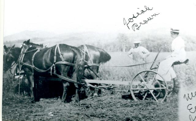 Farm Hay