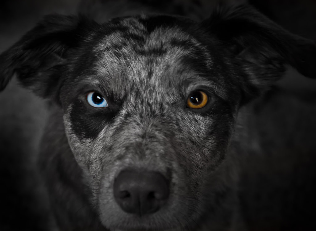 The eyes have it... (Heterochromia)