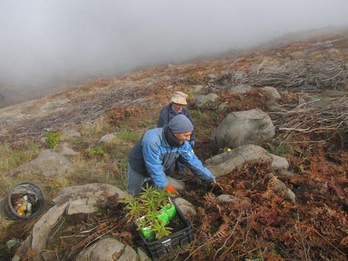 Foto 12-Campo de Educação Ambiental do Cabeço da Lenha-12.02.12(RQ)