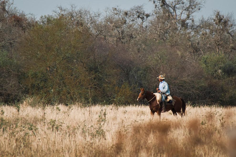 Un vaqueano patrulla por los secos pastizales en la zona comprendida entre Laguna Campo León y el camino a Laguna Campo María. La sequía que castiga el ecosistema en esta región pinta el paisaje de tonalidades marrones. En el caso del Chaco, en cuanto a la población botánica, predomina una vegetación espinosa semi-árida en el oeste, bosques sub-húmedos en el nordeste, y sabanas con ciertas especies como el caranda'y, en el sureste. (Elton Núñez)
