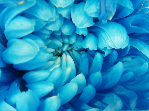 Blue Flower Petals