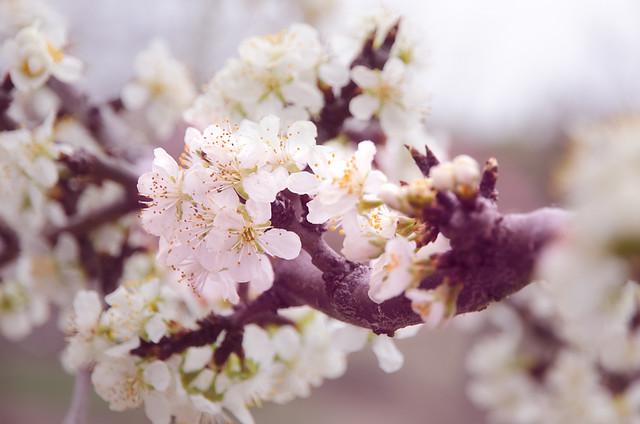 Floreciendo..