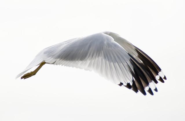 My first birds in flight.