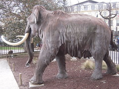 cattle-like mammal(0.0), zoo(0.0), wildlife(0.0), animal(1.0), indian elephant(1.0), elephant(1.0), elephants and mammoths(1.0), mammoth(1.0), african elephant(1.0), fauna(1.0),