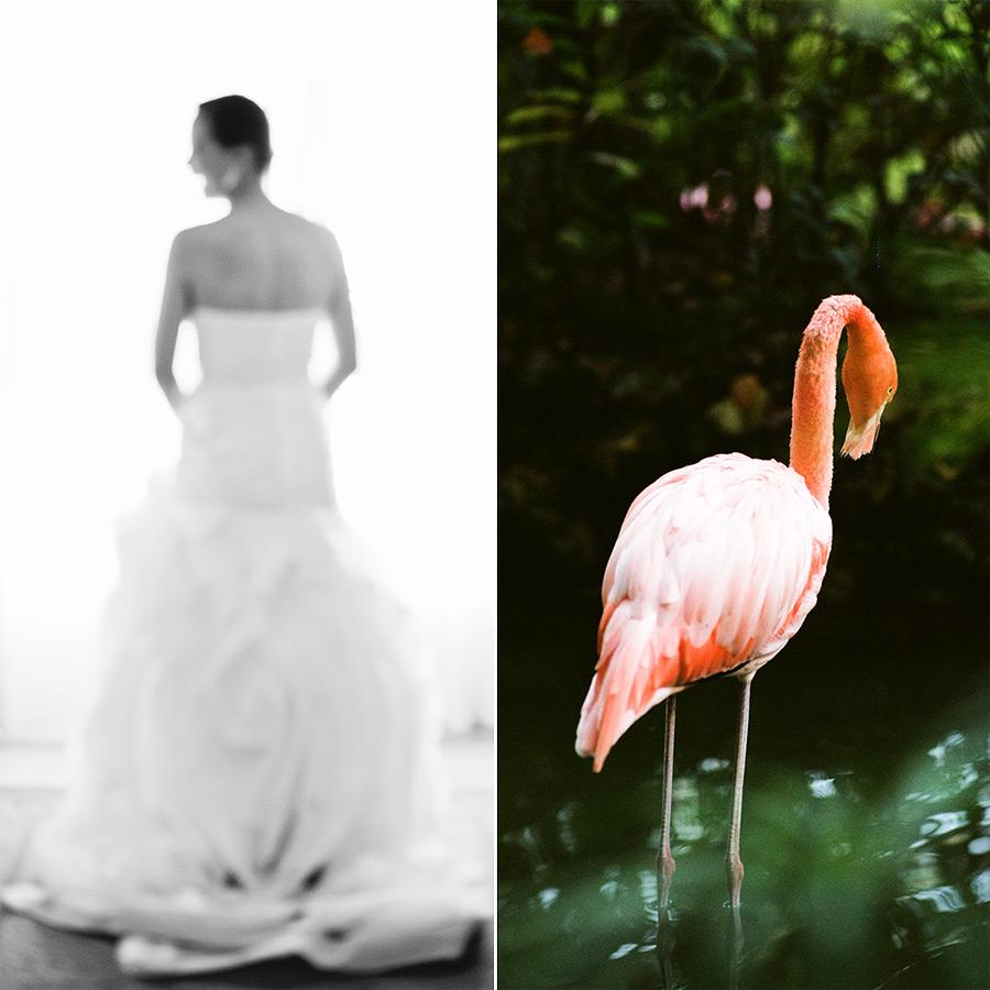 Flora Flamingo