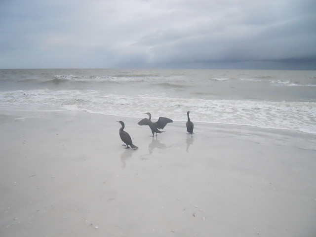 Florida 3 110