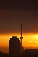 THE SUNRISE & TOKYO SKY TREE
