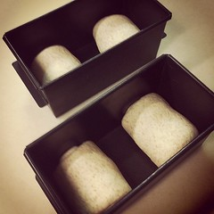 2個ずつ食パン型に入れますよ。  これをまた発酵させます。 #パン中継