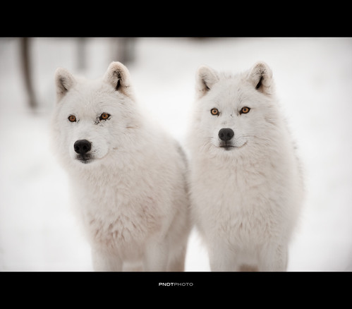 Arctic duet [Explored] by _pndt