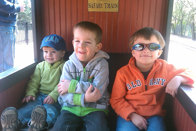 113  | 366 zoo train