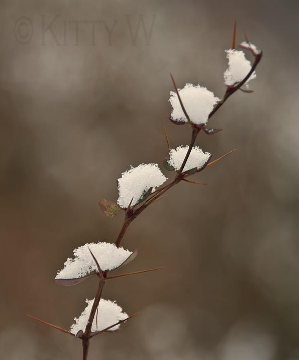Tiers of Snow