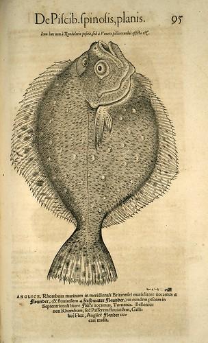 009-Lenguado-Icones animalium- (1553)- Conrad  Gesner- SICD Strasbourg