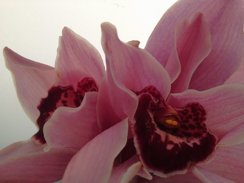 Day 63 — #366project — last of the orchids