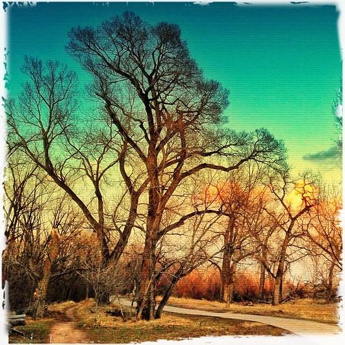 trees sunset sky usa nature clouds colorado boulder squareformat sundays flickraward iphoneography iphoneonly flickrawardgallery iphone4s