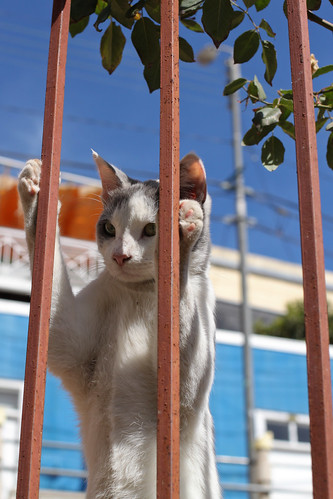 [フリー画像素材] 動物 1, 猫・ネコ ID:201205051000