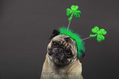 Happy St. Patrick's Day! by Megan Lorenz