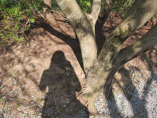 nature shadow