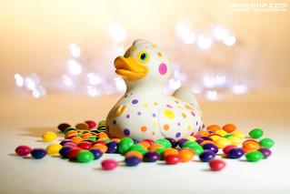 Bud Ducks (2)