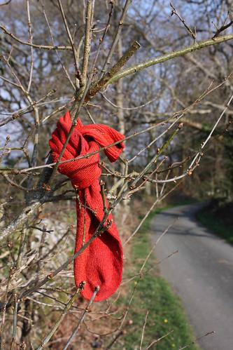 Lost sock by Helen in Wales