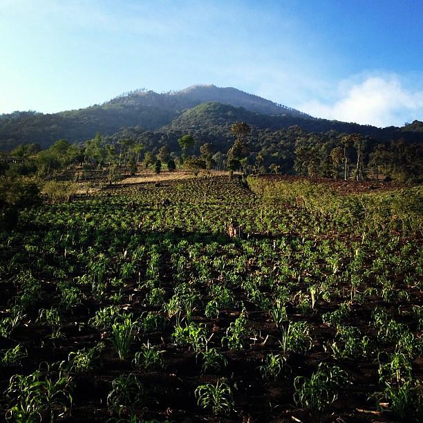 Going up, many hours to go. #Guatemala #Acatenango