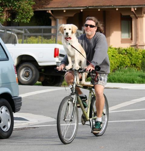 Dog rides a bike