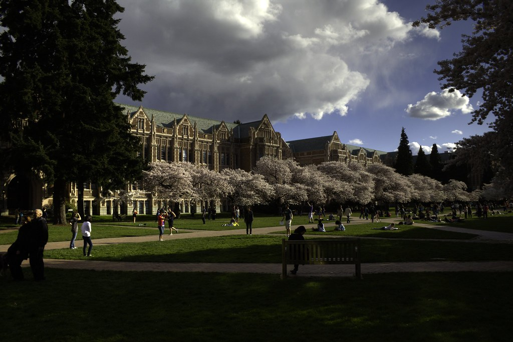 UW Cherry Blossoms 2012