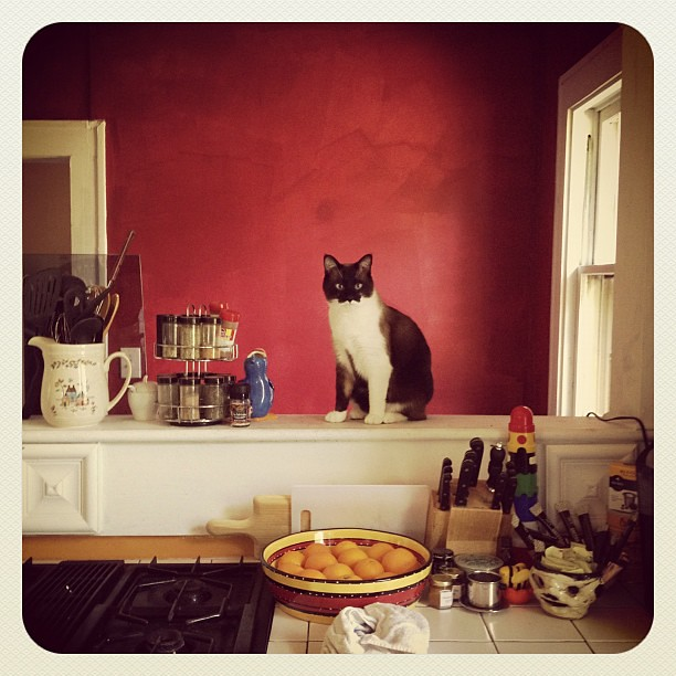 kitchen cat