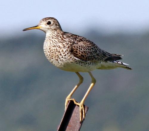Kansas Birding Festival